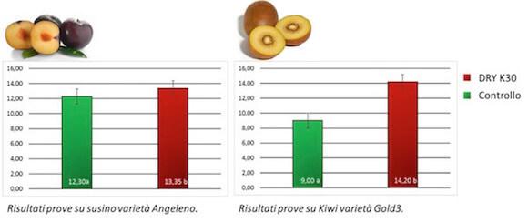 Risultati prove su Kiwi varietà Gold3 e su susino varietà Angeleno. L'istogramma rosso, a destra nei grafici, indica il valore in gradi Brix dei frutti nelle tesi trattate con DRY K30.